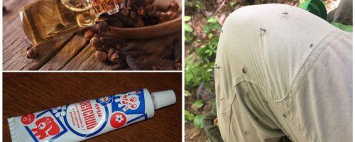 Λαϊκές θεραπείες για τα κουνούπια