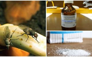 Πώς να απαλλαγείτε από τις μύγες κρεμμυδιών