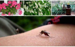 Πώς να χειριστείτε τα κουνούπια σε ένα διαμέρισμα ή ένα σπίτι