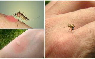 Γιατί τα κουνούπια δαγκώνουν μερικούς ανθρώπους περισσότερο από άλλους