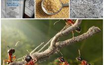 Καταπολέμηση μυρμήγκια στον κήπο οικόπεδο λαϊκές θεραπείες