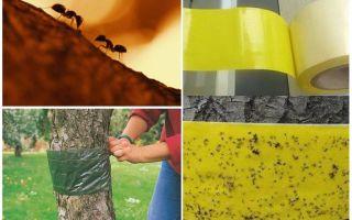 Πώς να χειριστείτε τα μυρμήγκια στα δέντρα στον κήπο
