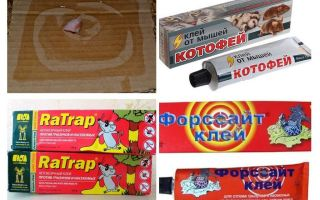 Κόλλα για αρουραίους και ποντικούς