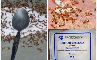 Πώς να χειριστείτε τα κόκκινα μυρμήγκια