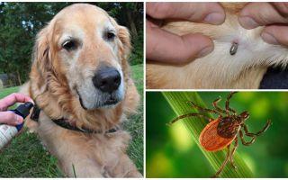Ψεκασμοί για σκύλους ενάντια σε κρότωνες και ψύλλους