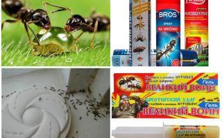 Πώς να καταστρέψει τα μυρμήγκια και τον μυαλό