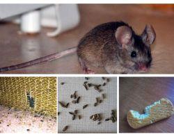 Πώς να αντιμετωπίσετε τα ποντίκια στο διαμέρισμα