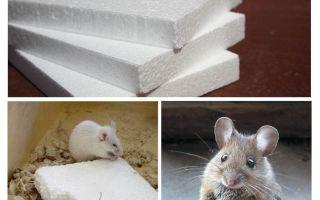 Τα ποντίκια κουράζουν αφρό