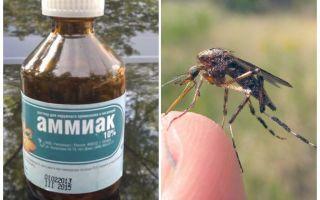 Υγρή αμμωνία από τα κουνούπια