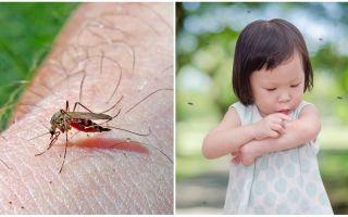 Πόσες μέρες πηγαίνει το δάγκωμα των κουνουπιών;