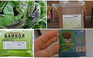 Πώς να απαλλαγείτε από κάμπιες στις λαϊκές θεραπείες λάχανο