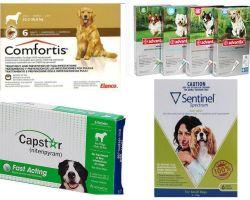 Πώς να απαλλαγείτε από τους ψύλλους στα σκυλιά, το πιο αποτελεσματικό μέσο των ψύλλων