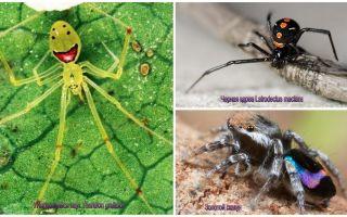 Οι πιο όμορφες αράχνες στον κόσμο