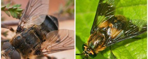 Η διαφορά μεταξύ του gadfly και του τυφλού