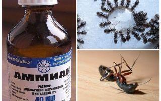 Αμμωνία από τα μυρμήγκια και τις αφίδες