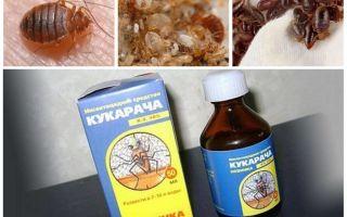 Cucaracha θεραπεία για bedbugs