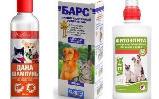 Το πιο δημοφιλές και αποτελεσματικό σαμπουάν ψύλλων για σκύλους