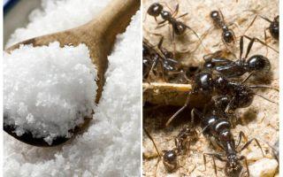 Αλάτι κατά των μυρμηγκιών στον κήπο