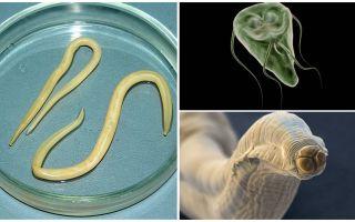 Σύγκριση Giardia και Worms