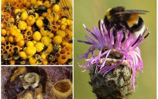 Το μέλι έχει τα bumblebees