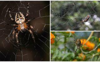 Οι αράχνες ξέρουν πώς να πετούν