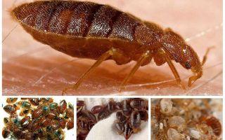 Κάνουν οι κατσαρίδες τρώνε σφάλματα