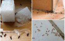Πώς να απαλλαγείτε από τα μυρμήγκια σε ένα ιδιωτικό σπίτι διορθωτικά μέτρα σπίτι