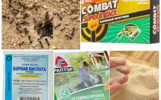 Προωθήστε τα μυρμήγκια