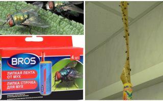 Κατάστημα και λαϊκές θεραπείες για τις μύγες
