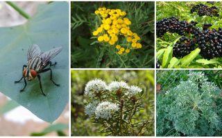 Ποια μυρωδιά φοβούνται τις μύγες και τα κουνούπια