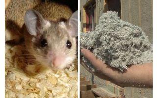 Τι είδους μόνωση δεν τρώνε ποντίκια