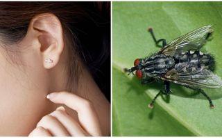 Πώς να πάρετε μια μύγα από το αυτί σας στο σπίτι
