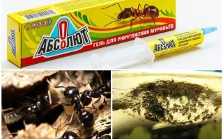 Απόλυτα από τα μυρμήγκια