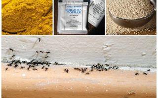 Ταμεία από τα μυρμήγκια στο σπίτι της χώρας
