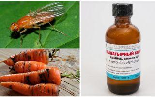 Καταπολέμηση της μύγας καρότου με αμμωνία