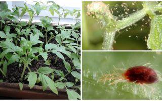 Μέθοδοι αντιμετώπισης ακάρεων αράχνης στα φυτά
