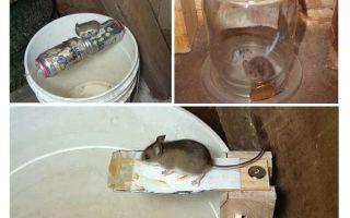 Πώς να κάνετε μια ποντικοπαγίδα με τα χέρια σας