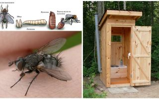 Πώς να απαλλαγείτε από μύγες στην τουαλέτα στο δρόμο