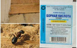 Πώς να αφαιρέσετε τα μυρμήγκια από ένα ξύλινο σπίτι