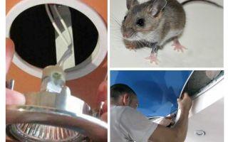 Πώς να απαλλαγείτε από ποντίκια στην οροφή τέντωμα