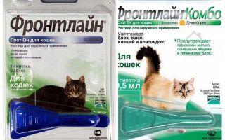 Πτώση των ψύλλων για τις γάτες