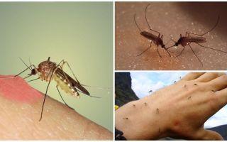 Γιατί τα κουνούπια στη φύση
