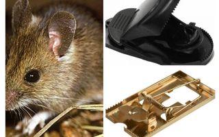 Πώς να βάλετε μια ποντικοπαγίδα