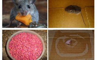 Πώς να βγάλετε τα ποντίκια από το γκαράζ