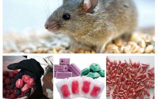Δηλητήριο για ποντικούς και ποντικούς