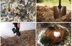 Πώς να πάρει τα μυρμήγκια έξω από τις λαϊκές θεραπείες κήπο