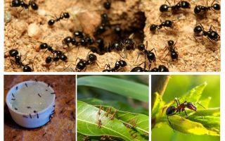 Τι μυρμήγκια φοβούνται