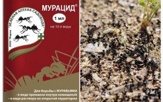 Μυρμηκτικά μυρμήγκια