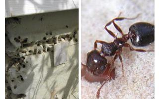 Τα μυρμήγκια ζουν σε μόνωση