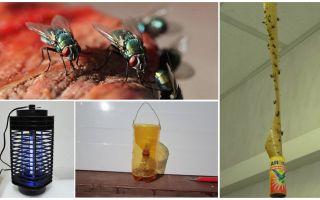 Πώς να χειριστείτε τις μύγες στη χώρα